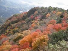 寒霞渓3 紅葉 ©(一社)小豆島観光協会