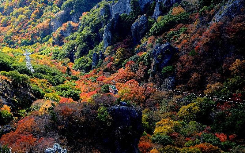 寒霞渓1 紅葉 ©(一社)小豆島観光協会