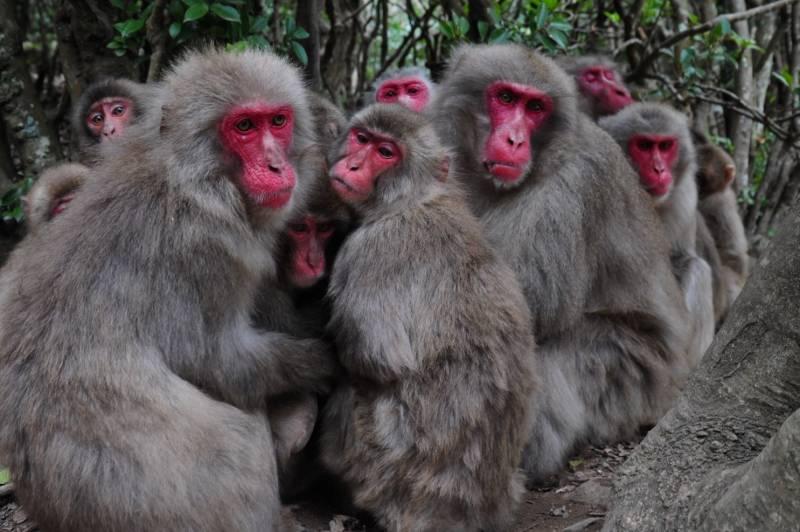 #猿団子はじめました