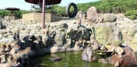 銚子渓 お猿の国