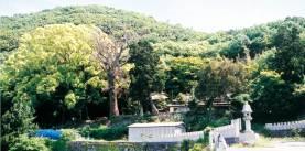 湯船山の樹林(ゆぶねさんのじゅりん)