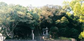 天津神社社叢(あまつじんじゃしゃそう)