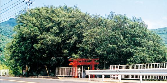 西山稲荷神社社叢(にしやまいなりじんじゃしゃそう)