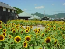 お花畑 二十四の瞳映画村